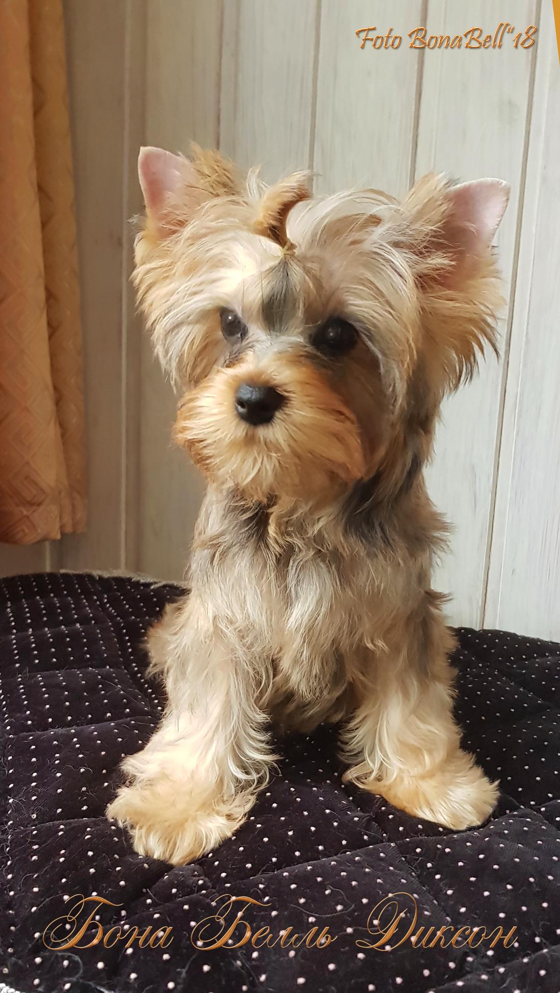 питомник русская салонная собака